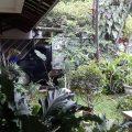 Rumah Sangat Asri, Nyaman,  Harga Menarik Belakang Citos Mall Jakarta Selatan