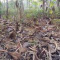 Tanah Kapling 60 Juta di Pandak Bantul
