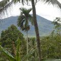 Tanah Dijual Luas dan Murah Siap Pakai, kaduhejo, Pandeglang, Banten