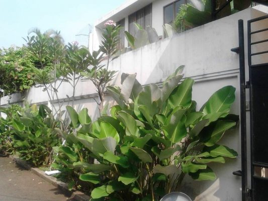 Rumah Bagus Siap Huni di Simprug Garden Swimming Pool, Jakarta Selatan